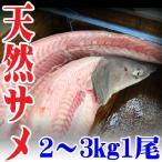 山形県産 天然 サメ (アブラツノザメ) 1本下処理済み頭付アラなし 2?3kg 冷蔵 鮮魚 焼き物、フライに最適