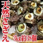 山形県産 サザエ 3kg約38個(8/10到着分までの注文) バーベキュー 海鮮 さざえ 刺身 生食用