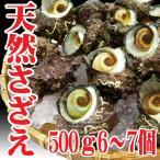 山形県産 サザエ 500g6?7個(8/10到着分までの注文) バーベキュー 海鮮 さざえ 刺身 生食用