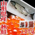 秋鮭 生 切身 メス 3.5〜4kgを半身 いくら 生冷蔵 山形県産 鮭
