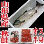 秋鮭 生 切身 オス3.5〜4kgを半身 白子アラ付 生冷蔵 山形県産 鮭