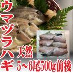 山形県産 ウマヅラハギ 500g4?6尾 冷凍 鮮魚セット カワハギ ウマズラハギ