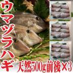 山形県産 ウマヅラハギ 500g4?6尾×3パック 冷凍 鮮魚セット カワハギ ウマズラハギ