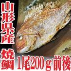 焼き鯛 山形県産 天然 真鯛 1尾200g前後 焼鯛 塩焼き マダイ 鮮魚 海鮮