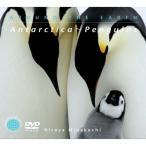 南極 ペンギンヒーリング CD 音楽 癒し ヒーリングミュージック