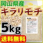 もち麦 国産 5kg 送料無料 セール特売品