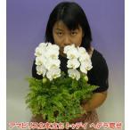 こころ花の画像2