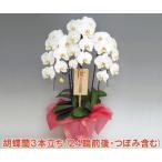 こころ花の画像1