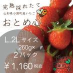 イチゴ好きのイチゴです!イチゴ2パック(約260gx2)2L、Lサイズ 完熟採れたてイチゴです。山形県産「おとめ心」是非お試しください