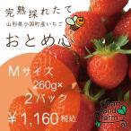 イチゴ好きのイチゴです!イチゴ2パック(約260gx2)Mサイズ 完熟採れたてイチゴです。山形県産「おとめ心」是非お試しください