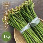 わらび 山形県小国町産山菜 生わらび1kg 太くてトロトロ食感、最上級わらびです!