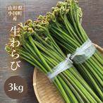 わらび 山形県小国町産山菜 生わらび3kg 太くてトロトロ食感、最上級わらびです!
