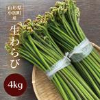 わらび 山形県小国町産山菜 生わらび4kg 太くてトロトロ食感、最上級わらびです!
