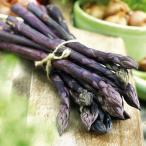 Heirloom Asparagus Pacific Purple エアルーム・アスパラガス・パシフィック・パープル(2苗)