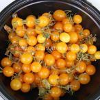 日本唯一のエアルームトマト専門ナーセリー&ファーム
