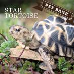 貯金箱 ペットバンク STAR TORTOISE / ホシガメ