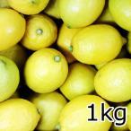 送料込み 広島産 レモン 約1kg なかだい 農園直送 サイズいろいろ クール便 広島ブランド 特別栽培農産物認定 国産レモン 呉市大崎下島 大長のレモン