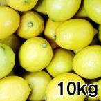 送料込み 広島産 レモン 約10kg なかだい 農園直送 サイズいろいろ 広島ブランド 特別栽培農産物認定 国産レモン 呉市大崎下島 大長のレモン