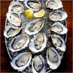 カキ 牡蠣 オイスター ハーフシェル 生食用冷凍生 (約7cm×12個入り×2入り 225円/1個当たり)