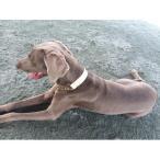 ハーフチョーク 大型犬 超大型犬用 3cm幅