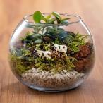 日比谷花壇 父の日 スイレン栽培セット ピンク系  花 プレゼント ギフト 父の日カード付き