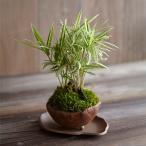 父の日 テラリウム「ホースプレーリー」観葉植物 日比谷花壇 花 プレゼント ギフト 父の日カード付き