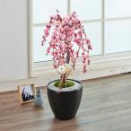 お正月 花鉢「しだれ梅」盆栽 ピンク系 日比谷花壇