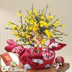 お正月 花鉢「黄梅」盆栽 金箔入り煎茶「お年賀 寿」付き 日比谷花壇