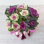 お正月 「水仙」 日比谷花壇