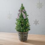 クリスマス モミの木ツリー「フェリスタス」 日比谷花壇