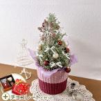 クリスマス 花鉢 ツリー「サントリーナ」シルバーリーフ系ゴディバのチョコレート付き 日比谷花壇
