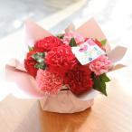 母の日 花 プレゼント カーネーション アレンジメント「シェールママン」  ギフト 母の日カード付き 日比谷花壇