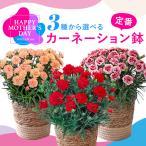 3種選べるカーネーション鉢 フラワー プレゼント ギフト 鉢植え 母の日カード付き 日比谷花壇
