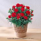 母の日 花鉢  「カーネーション(レッド系)」  日比谷花壇