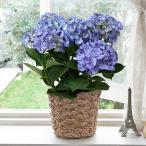 母の日 アジサイ 花鉢 衣純千織 日比谷花壇