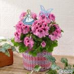 母の日 ギフト 花鉢 ディズニー 「ペラルゴニウム アリストピンク(不思議の国のアリス)」  日比谷花壇