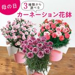 母の日 花 3種類から選べるアジサイ 鉢植え 日比谷花壇