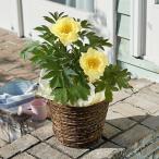 母の日 ギフト 花鉢 大西 隆コレクション ミニバラ(レッド) 日比谷花壇