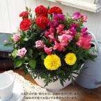 母の日 花鉢  コンテナプランツ「ソレイユガーデン」  日比谷花壇
