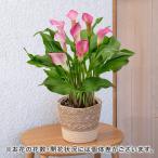 母の日 ギフト 花鉢 カラー 「フォーエバー」 日比谷花壇