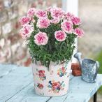 母の日 花鉢  カーネーション「フィナンシェ」  日比谷花壇