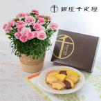 母の日 ギフト スイーツセット アンリ・シャルパンティエ「プティ・ガトー・アソルティ」とカーネーション鉢のセット 送料無料 日比谷花壇