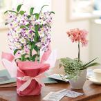 ショッピング母の日 母の日 ギフト ペア特撰蘭鉢のセット送料無料 日比谷花壇