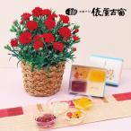 母の日 日本橋屋長兵衛「江戸桃よ」とカーネーション鉢のセット 日比谷花壇