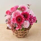 10月の旬の花 アレンジメント「カリーニョ」   花  ギフト 誕生日 プレゼント 日比谷花壇