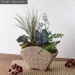 枯れない観葉植物、が情緒あふれる和テイストで登場。