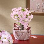 桜鉢「旭山 二股接ぎ木」 (風呂敷包み) 日比谷花壇
