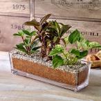 環境にやさしいエコスギ観葉植物 ポトス コルジリネ ペペロミア寄せ植え  日比谷花壇