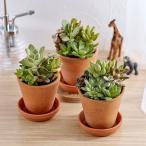 日比谷花壇 多肉植物「寄せ植え3個セット」日比谷花壇 おしゃれ インテリア