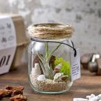 観葉植物 テラリウムキット 「グラスジャー (エアプランツ付き)」  インテリアグリーン 日比谷花壇
